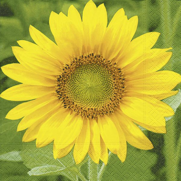 Serviette Sonnenblume 33x33cm 20er Pack bei Tischdeko-Shop.de