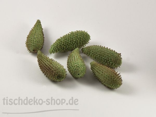 Datura-Früchte 8,5cm 6 Stück