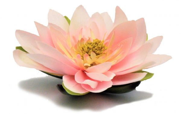 Seerose / Lotusblüte Rosa D 15cm bei Tischdeko-Shop.de
