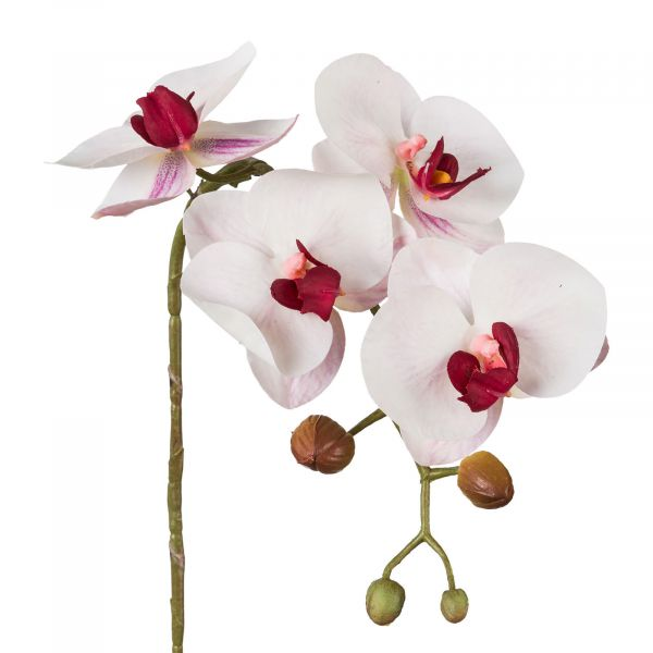 Phalaenopsis Orchidee Weiß Bordeaux 42cm Real Touch