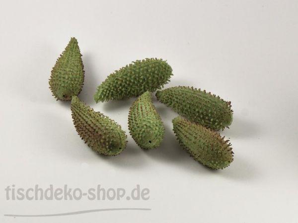 Datura-Früchte 8,5cm 6 Stück bei Tischdeko-Shop.de