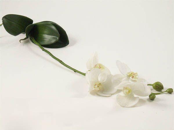 Phalaenopsis Weiß mit Blättern und Wurzeln ca. 60cm