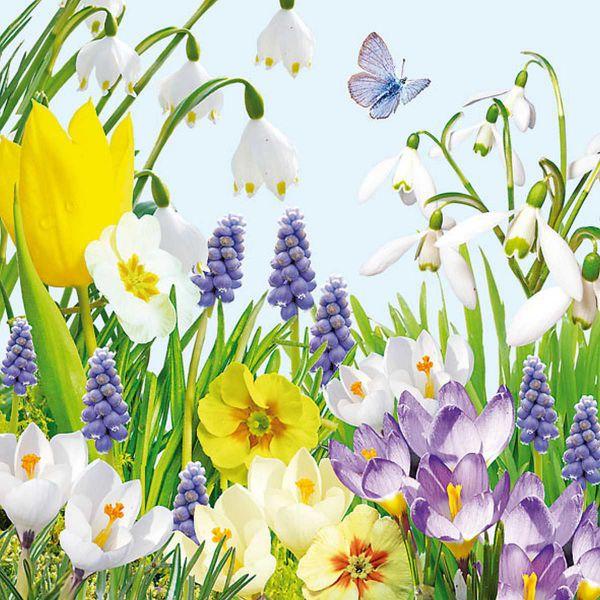 Serviette Spring Time Frühlingsblumen 33x33cm 20er Pack bei Tischdeko-Shop.de