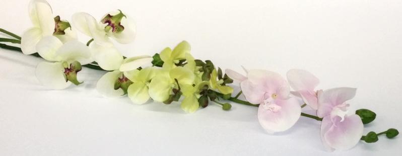 Orchideen online kaufen tischdeko - Tischdeko orchideen ...
