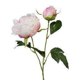 Pfingstrose mit Knospe Rosa 44cm