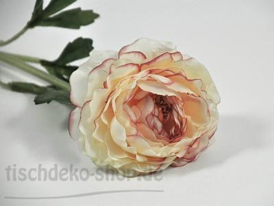 ranunkel-creme-rosa-bluete-9cm