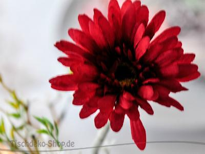 Gerbera Rot