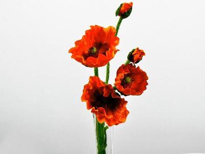 Mohn Orange/Rot 5er Bund 48cm Seidenblumen Dauerfloristik