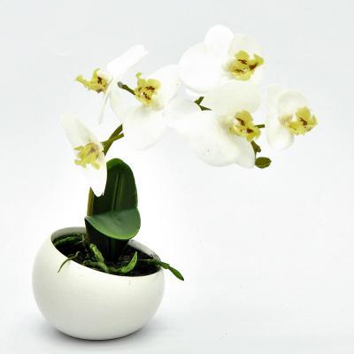 Orchidee in Keramikschale Weiß 23cm
