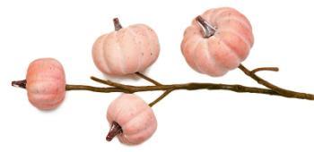 kuerbiszweig-rosa-apricot-63cm