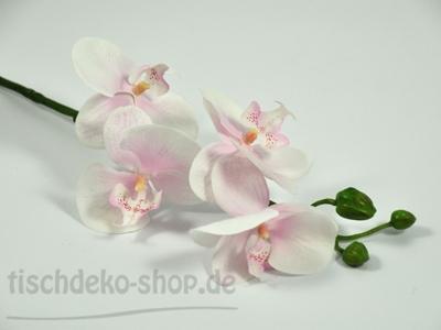 exklusive-phalaenopsis-rispe-60cm-rosa-weiss