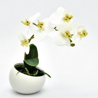 orchidee-in-keramikschale-weiss-23cm