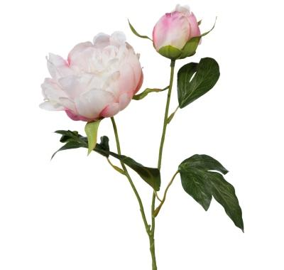 pfingstrose-mit-knospe-rosa-44cm
