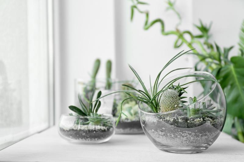 Mini-Sukkulenten auf der Fensterbank