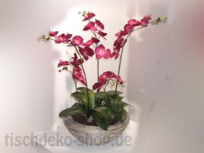 orchidee-im-korbumtopf-4-rispen-fuchsia