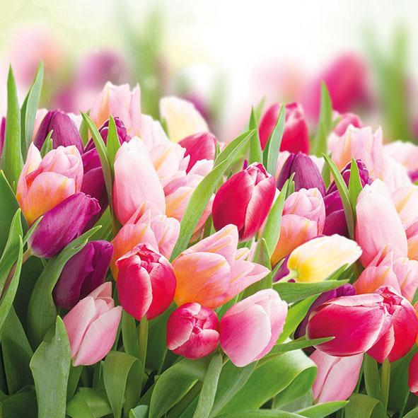 Serviette Glorious Tulips mit Tulpenmotiv 33cm 20er Pack - Tischdeko online kaufen