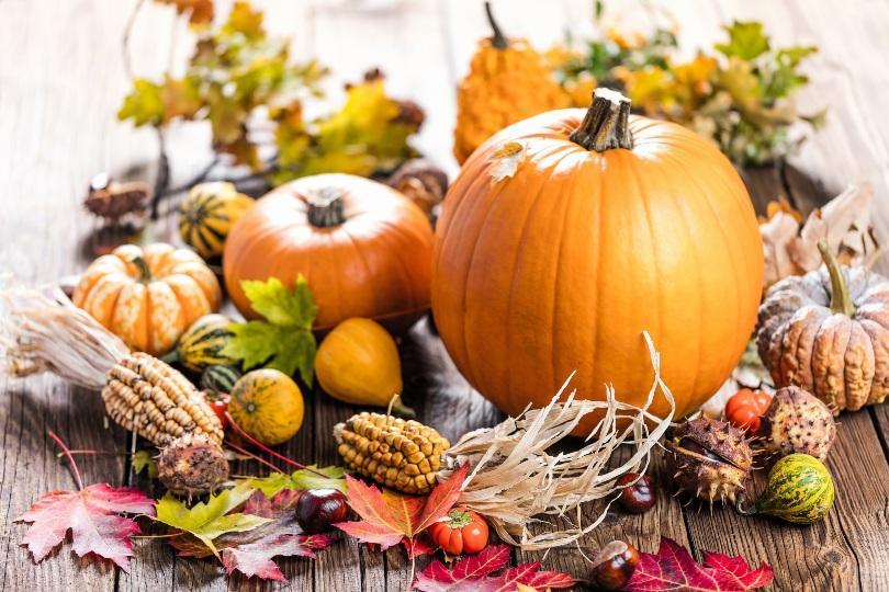 Kürbisse, Mais und weiteres Herbstgemüse - Erntedankfest-Deko