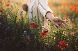 Frau sammelt Blumen für eine schöne Naturdeko