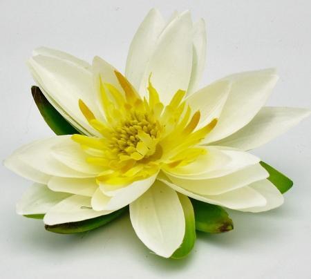 Lotusblüte / Seerose Creme D 15cm