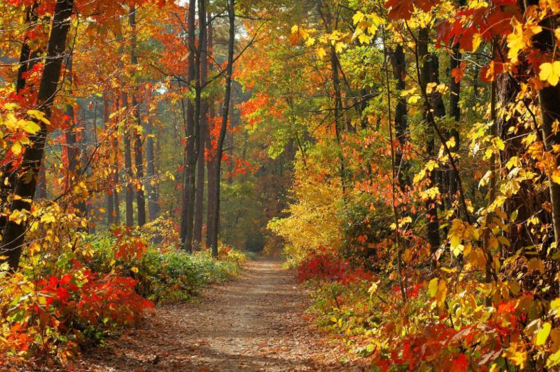 Herbstlicher Wald mit bunten Blättern