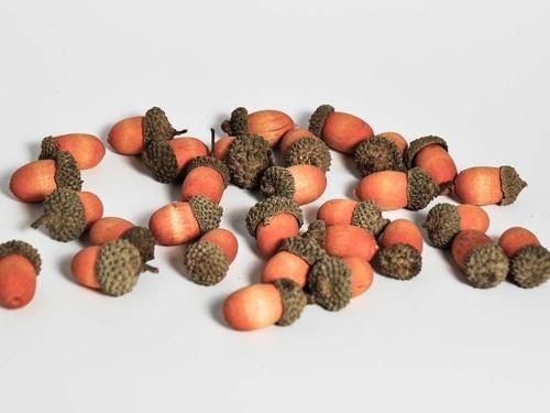 Deko-Eicheln Holz Orange ca. 3cm 30er Beutel