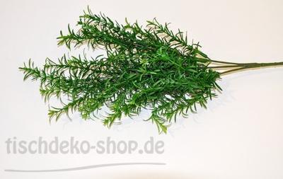 Spargel-Zweig ca. 60cm