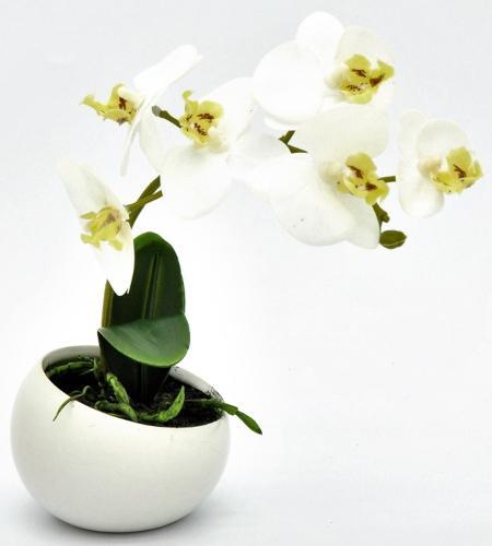 Orchidee in Keramikschale Weiß 23cm - Muttertagsgeschenke
