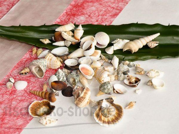Deko Muscheln sortiert 550ml - Sonne, Strand und Meer als Inspiration für die Tischdeko