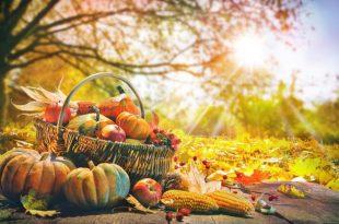 Gemüse, Natur im Herbst - Herbstdinner veranstalten